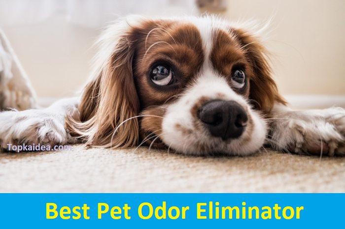 Best Pet Odor Eliminator products