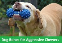 dog bones for aggressive chewers