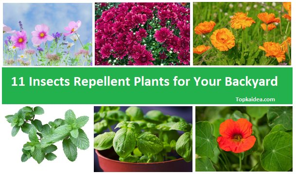 Best Insects Repellent Plants for Home
